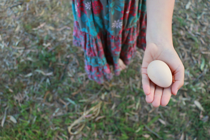 Tiny pullet egg. Little eco footprints