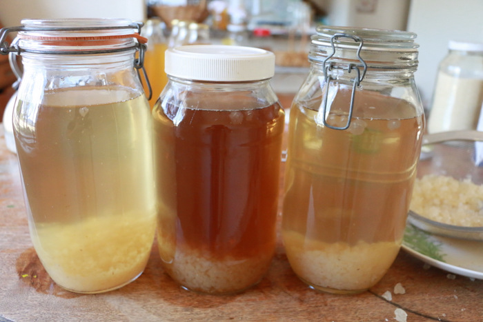 How to make water kefir. Water kefir grains in sugar solution. Little eco footprints.