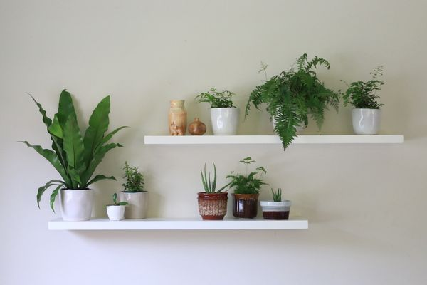 How to have healthy and happy indoor plants little eco for Less maintenance indoor plants