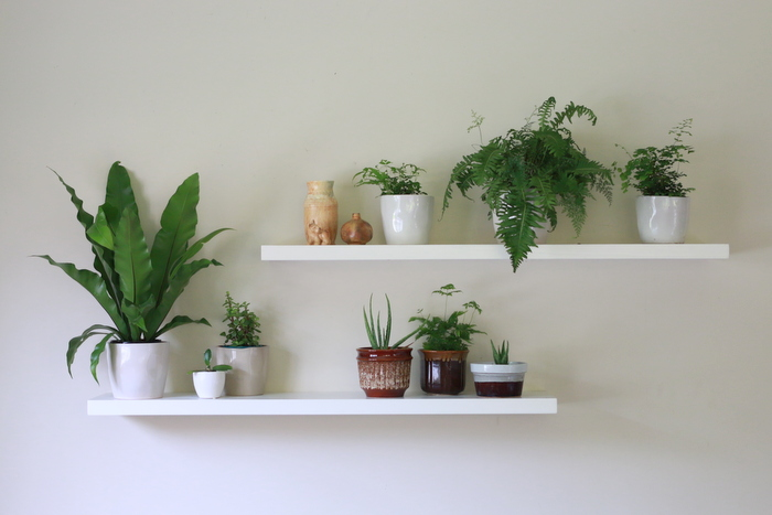 How to care for indoor plants. Little eco footprints