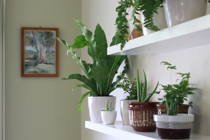 Houseplants only need a little love and attention to thrive. Little eco footprints