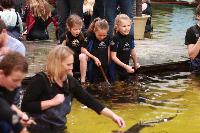 Irukandji Shark and Ray Encounters aqua nursery pool swimming with sharks and rays_ Little eco footprints