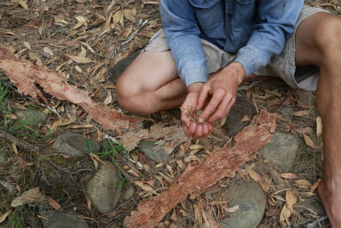 Wildcraft Australia bush survival courses Hunter Valley Australia. Sam making a tinder bundle. Little eco footprints