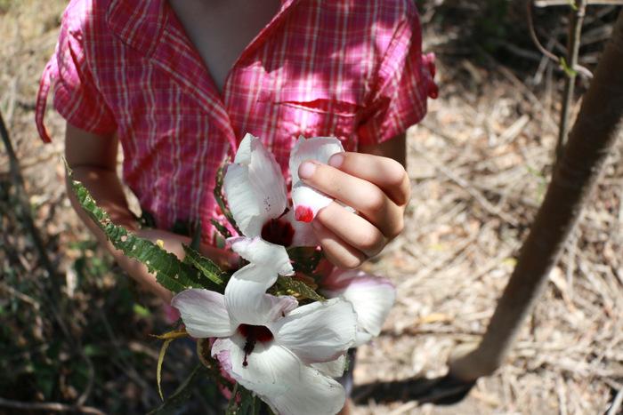 Foraging Native Hibiscus. Edible petals. Little eco footprints.