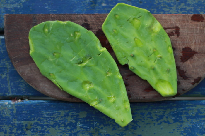 Preparing foraged Prickly Pear pads nopales. Little eco footprints