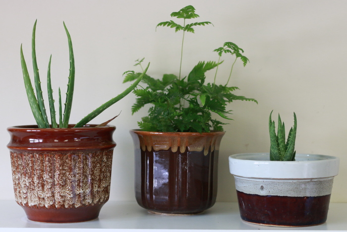 Indoor plants in preloved frugal pots. Little eco footprints