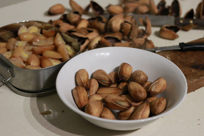 Bunya nuts opened by boiling in water until the shell softens and splits. Little eco footprints