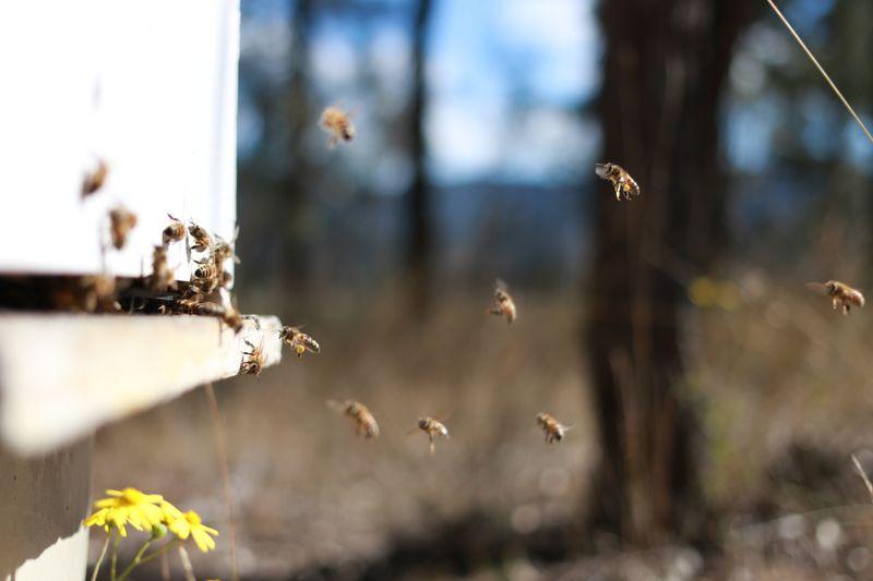 Busy buzzing bees enjoying the Australian sprinter season. Little eco footprints