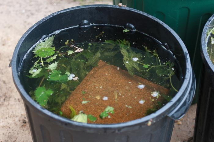 How to make stinging nettle liquid fertiliser. Little eco footprints