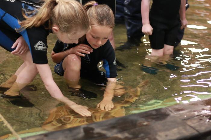 Irukandji Shark and Ray Encounters Bobs Farm Port Stephens Australia Little eco footprints